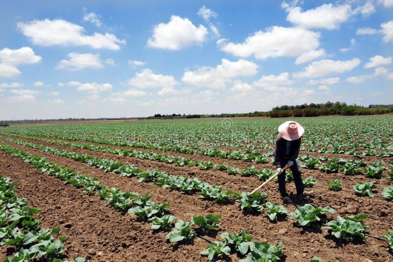 Trabalhador tailandês estrangeiro em Israel imagens de stock