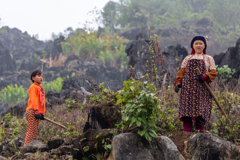 Trabalhadores agrícolas da minoria étnica de Hmong fotografia de stock royalty free