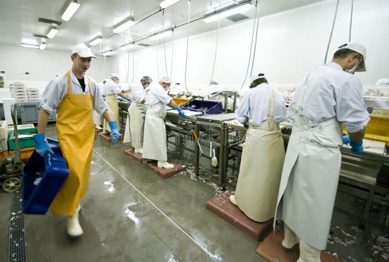 Trabalhadores da manufatura dos peixes foto de stock