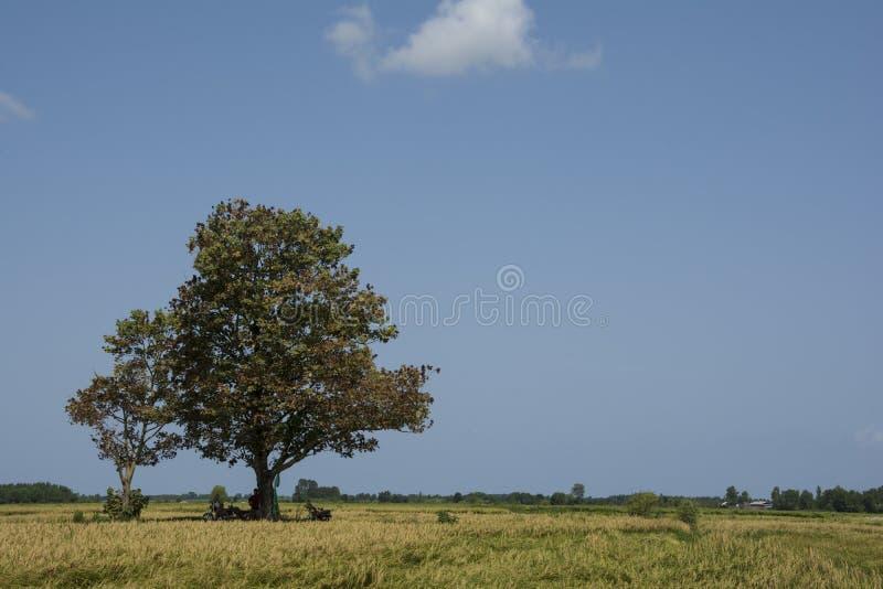 Trabalhadores do arroz que descansam sob a sombra da árvore santamente fotografia de stock royalty free