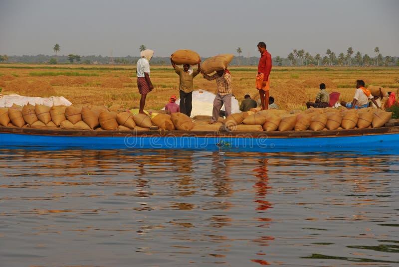 Trabalhadores que levam o saco de gunny pesado de arroz colhido em sua cabeça no barco azul longo a ser transportado imagem de stock royalty free