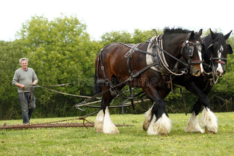 Trabalho da equipe do cavalo do condado fotografia de stock