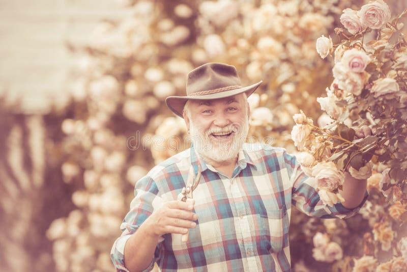 Trabalho de primeira geração no jardim sobre o fundo das rosas Apreciação de primeira geração no jardim com flores primavera no foto de stock
