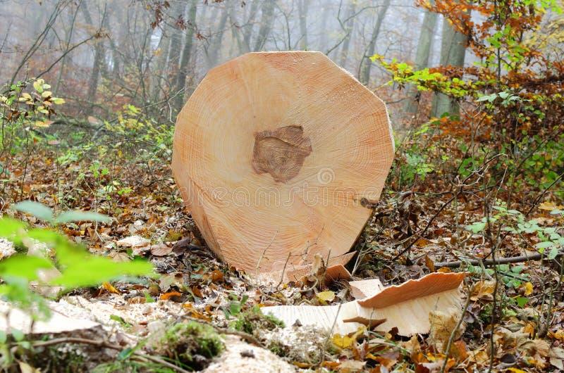 Trabalho de silvicultura fotografia de stock royalty free