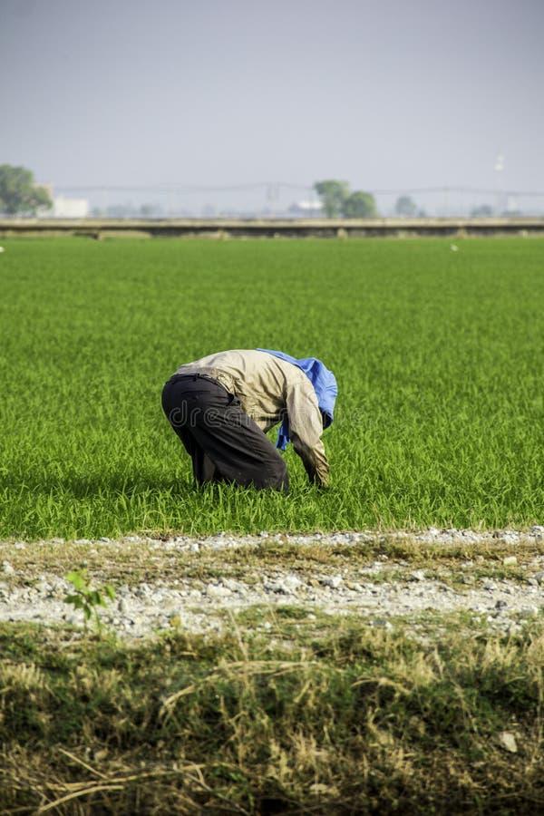 Trabalho do fazendeiro no campo de almofada imagem de stock royalty free