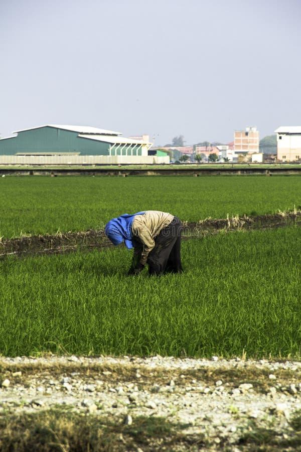 Trabalho do fazendeiro no campo de almofada fotografia de stock