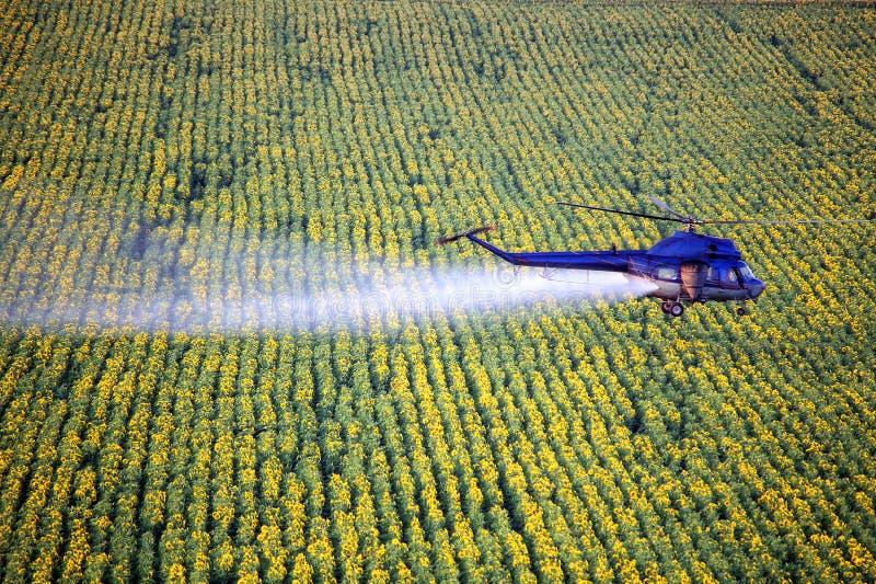 Trabalhos agrícolas Helicóptero que pulveriza acima do campo do girassol imagens de stock