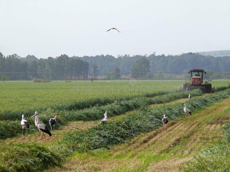 Trabalhos da agricultura fotografia de stock