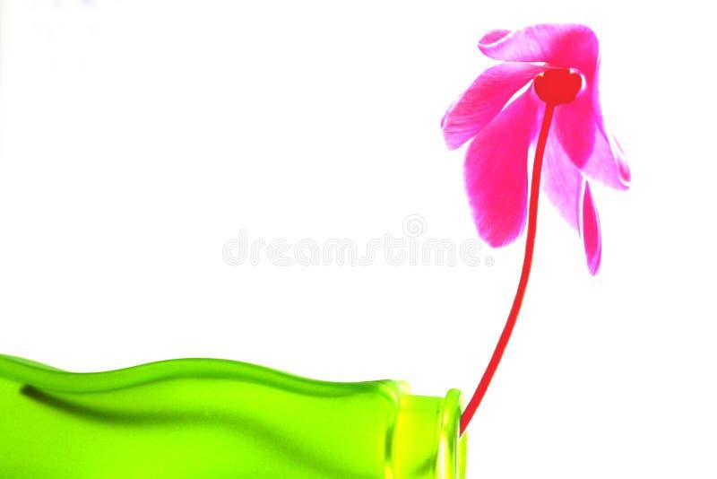 Trabalhos de equipa no verde e na cor-de-rosa imagem de stock royalty free