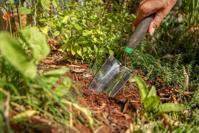 Trabalhos de jardinagem, escavando na sujeira que prepara-se para plantar imagem de stock royalty free