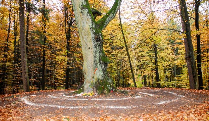 Trabalhos pagãos do altar e da espiral fora ao lado de uma árvore imagens de stock royalty free