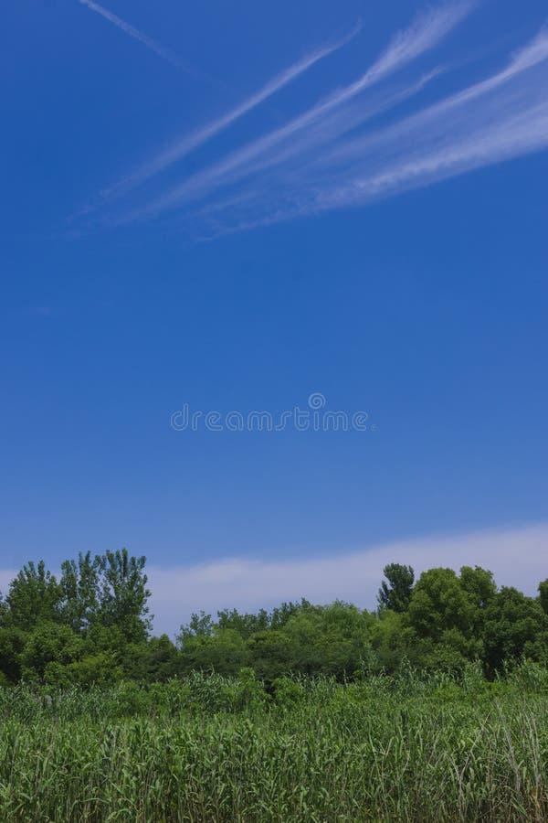 Tracce dell'aereo che sorvola il cielo blu fotografie stock libere da diritti