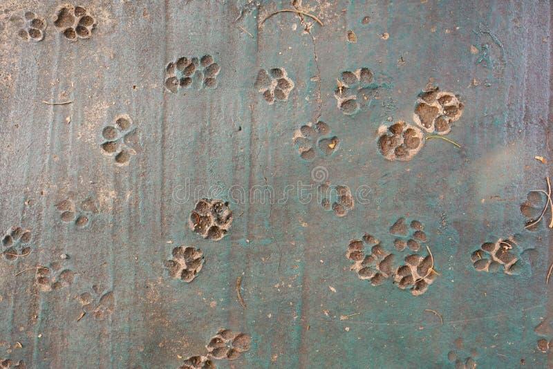 Tracce di cane nel pavimento, orme animali di vista superiore sul calcestruzzo immagini stock libere da diritti