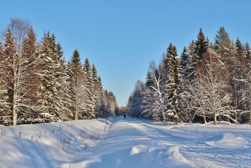 Tracce di gatto delle nevi attraverso il legno immagine stock libera da diritti