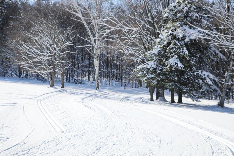 Tracce di sci di fondo Foresta di inverno coperta di neve Na fotografia stock libera da diritti