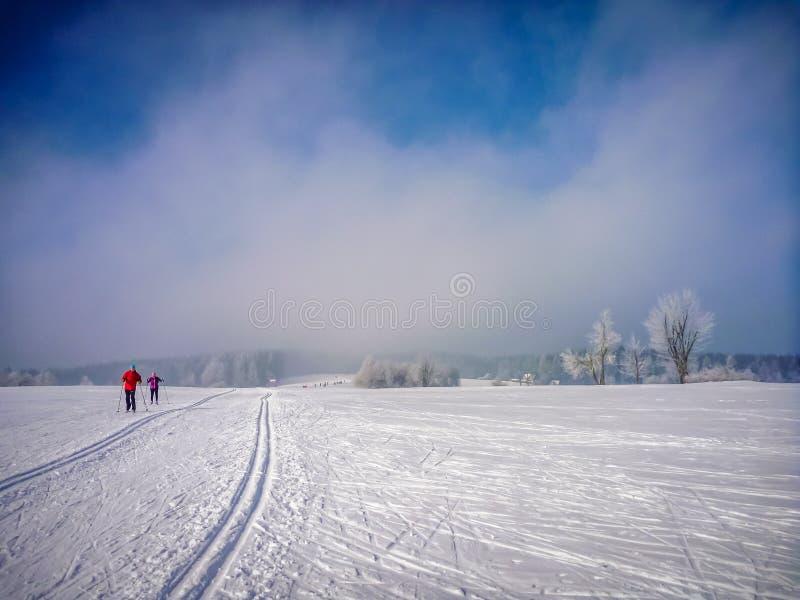 Tracce di sci nordiche sulle pianure nevose con le conifere vicino al Na Morave di Nove Mesto fotografia stock libera da diritti