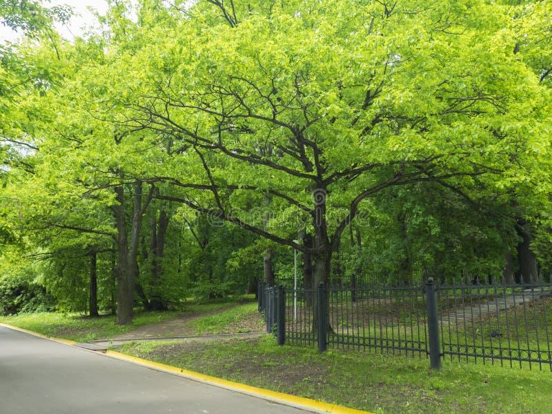 Tracce nel parco con gli alberi ed il recinto fotografia stock libera da diritti