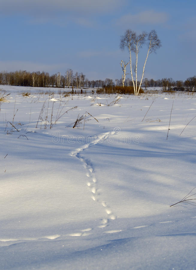Traccia animale su neve fotografie stock libere da diritti