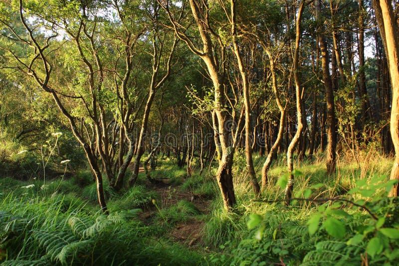 Traccia attraverso la foresta fotografia stock libera da diritti