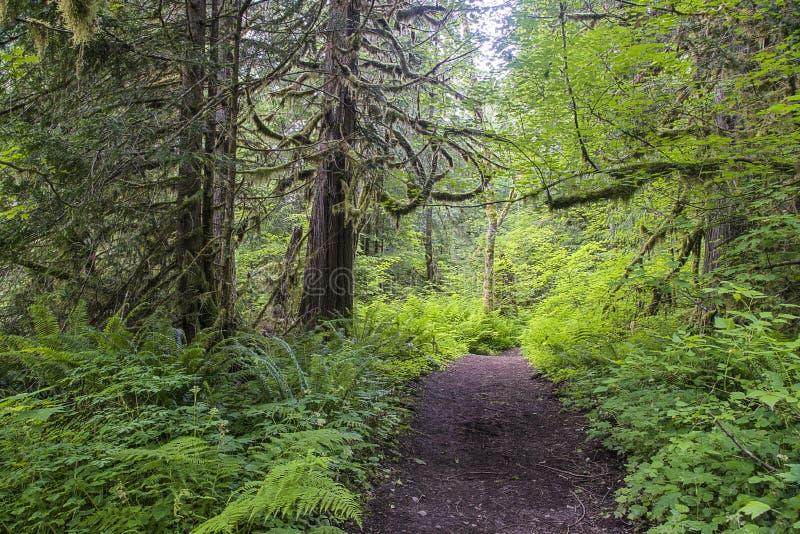 Traccia attraverso la foresta pluviale di nord-ovest pacifica fotografia stock