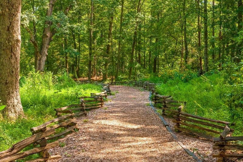 Traccia boscosa fra i recinti fotografia stock