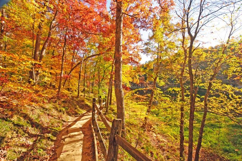 Traccia calma con i colori della foresta di caduta fotografia stock
