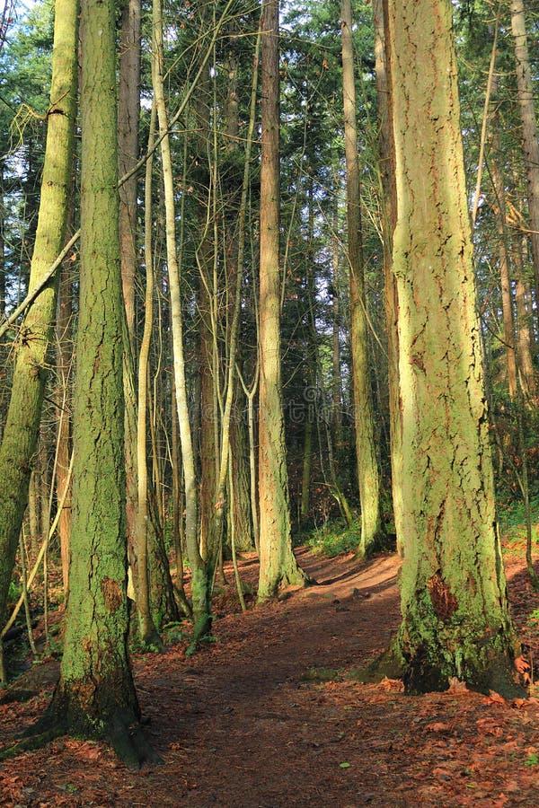 Traccia con Vale mistico nell'inverno, Victoria, Columbia Britannica immagine stock