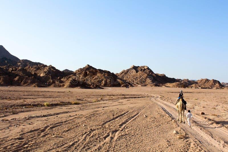 Traccia del deserto nel deserto di Sinai immagine stock