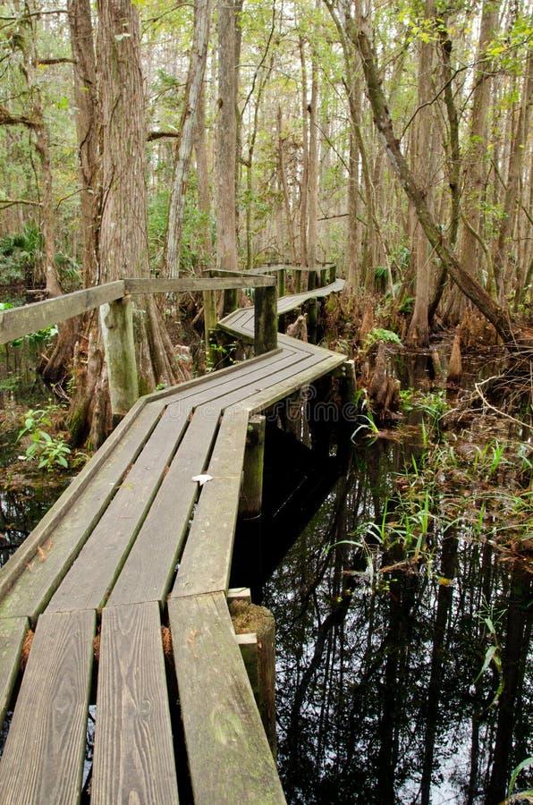 Traccia del sentiero costiero di Florida immagini stock libere da diritti