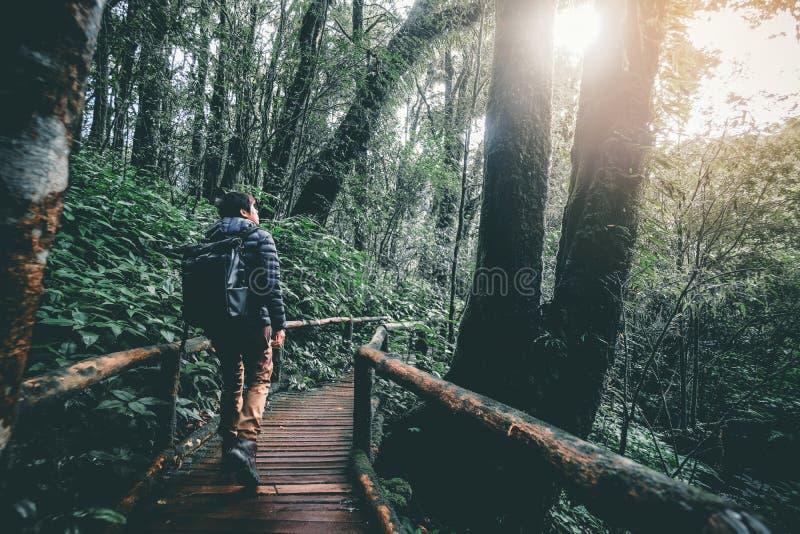 Traccia dell'uomo di avventure che fa un'escursione nella foresta immagine stock libera da diritti