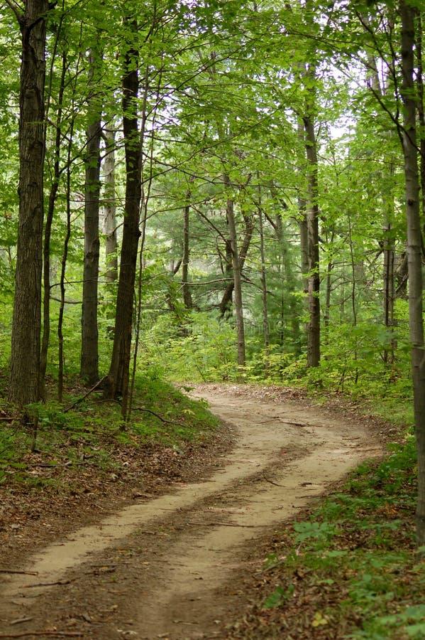 Traccia della foresta immagine stock