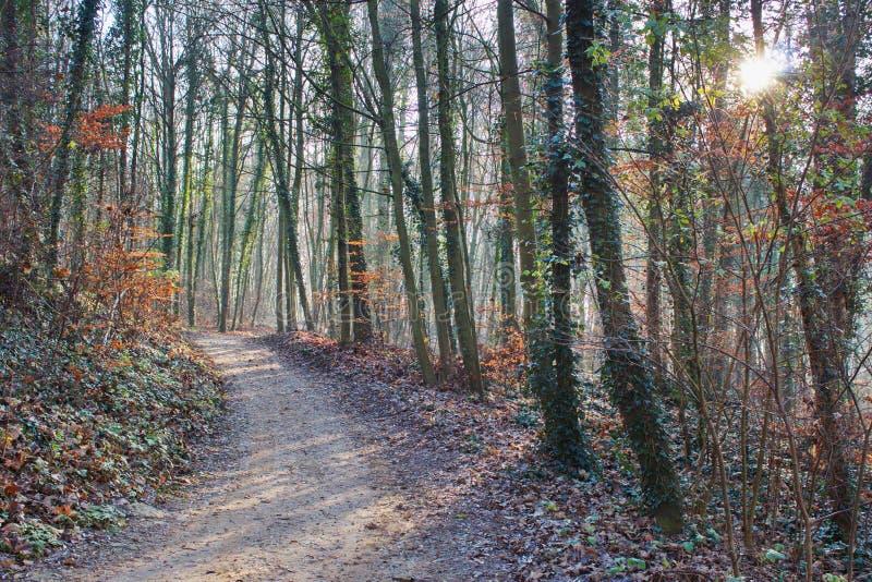 Traccia della foresta al sole fotografia stock libera da diritti