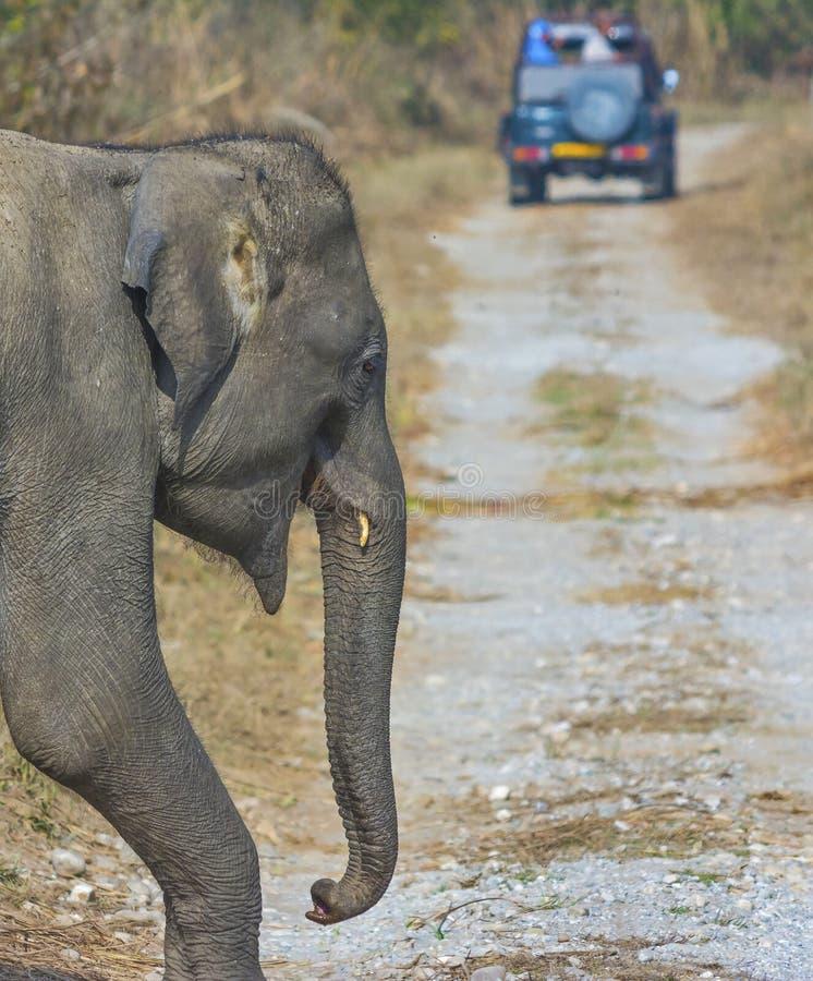 Traccia della foresta dell'incrocio dell'elefante immagini stock libere da diritti