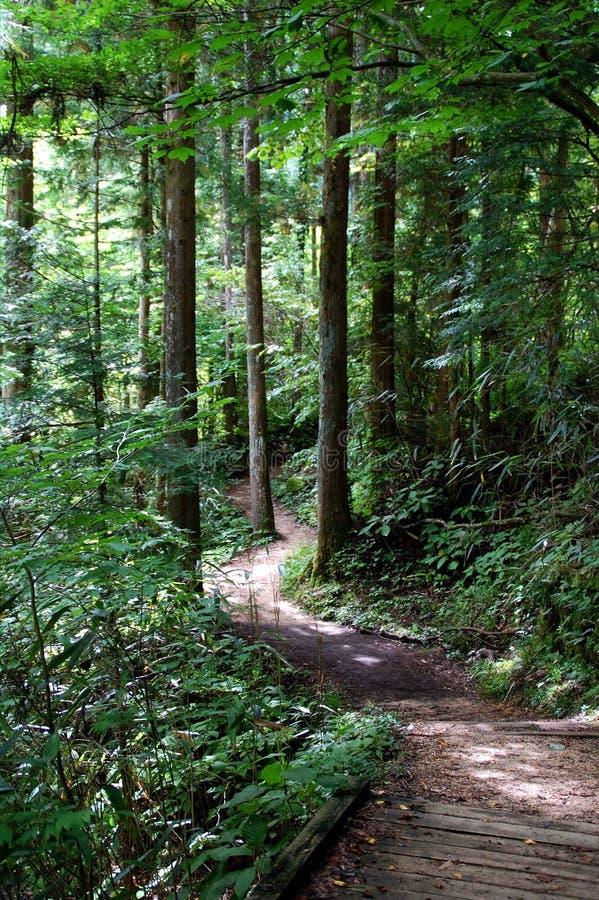 Traccia della foresta di Nakasendo immagine stock libera da diritti