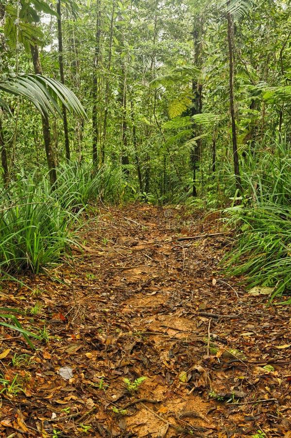 Traccia della giungla, Costa Rica immagine stock libera da diritti