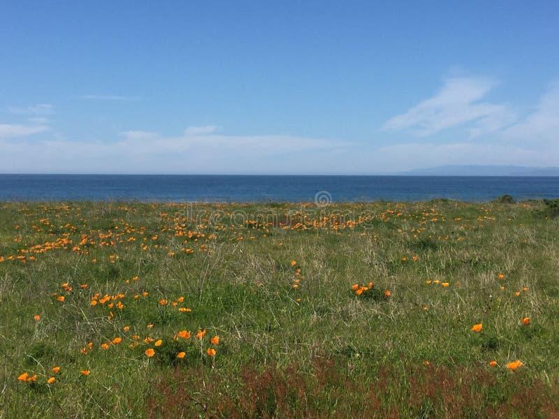 Traccia di Buchon del punto - campi dei papaveri con la vista di oceano fotografia stock libera da diritti