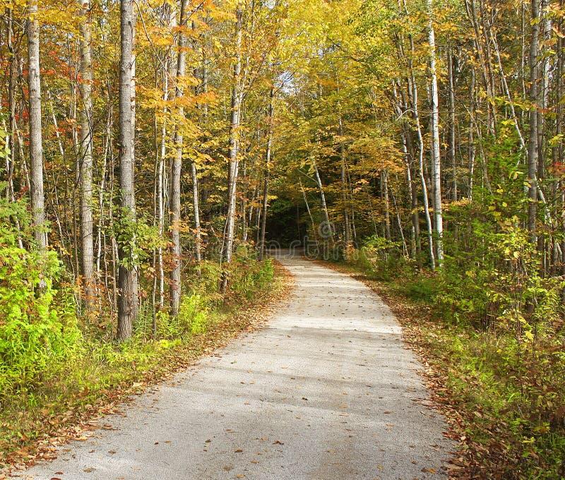 Traccia di camminata isolata che entra in legno I bei alberi con l'autunno colora la linea il percorso fotografie stock libere da diritti