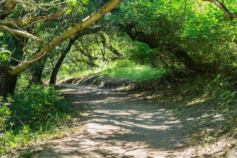 Traccia di escursione, area di San Francisco Bay, California fotografia stock libera da diritti