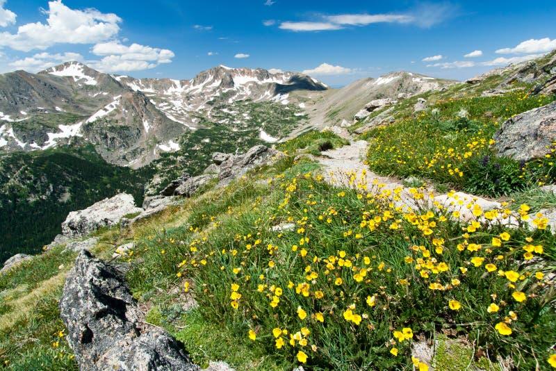 Traccia di escursione attraverso i fiori delle montagne di Colorado fotografia stock libera da diritti