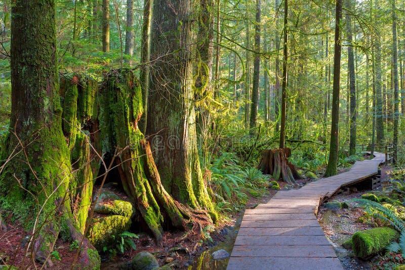 Traccia di escursione attraverso la foresta in Lynn Canyon Park Vancouver BC Canada immagine stock libera da diritti
