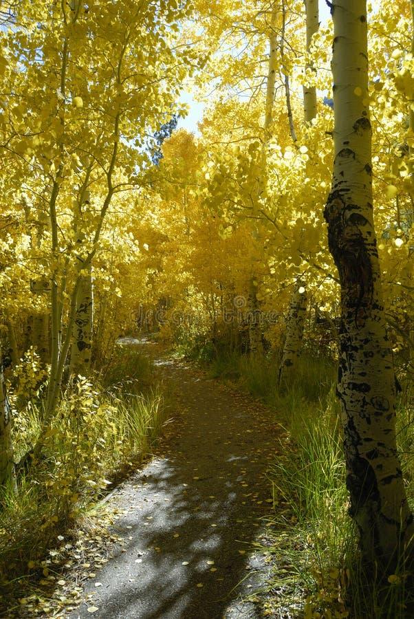Traccia di escursione attraverso le tremule in autunno fotografia stock libera da diritti