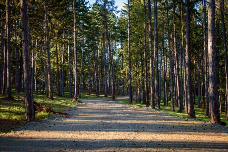 Traccia di escursione attraverso una bella foresta rurale immagine stock