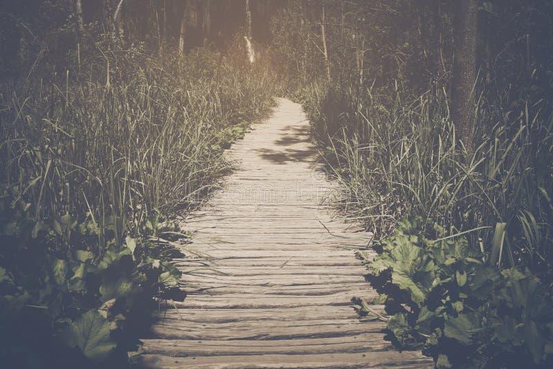 Traccia di escursione con luce solare fotografia stock libera da diritti