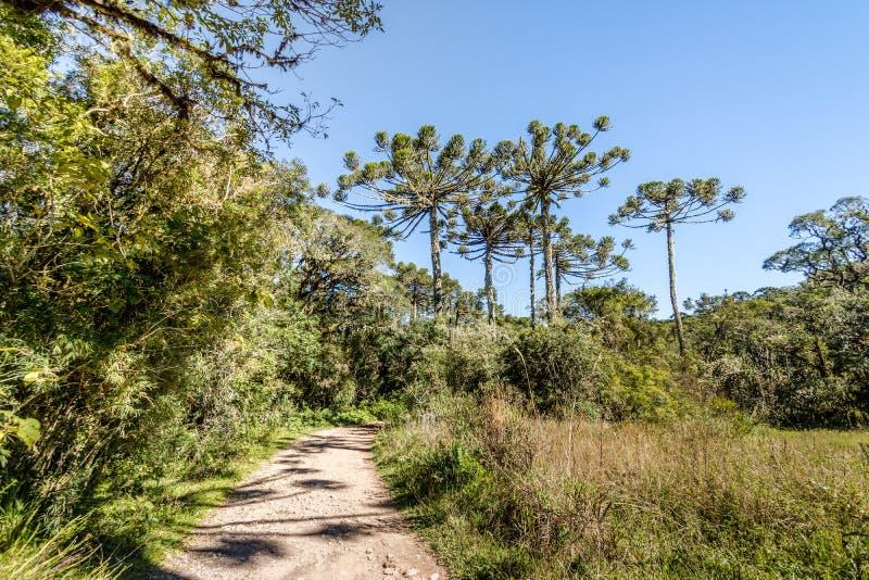 Traccia di escursione del canyon di Itaimbezinho a Aparados da Serra National Park - Cambara fa Sul, Rio Grande do Sul, Brasile immagini stock libere da diritti