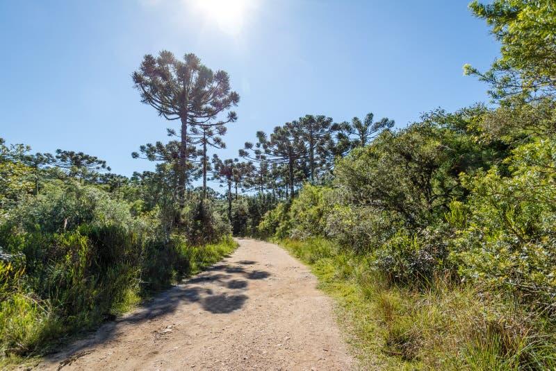Traccia di escursione del canyon di Itaimbezinho a Aparados da Serra National Park - Cambara fa Sul, Rio Grande do Sul, Brasile fotografie stock