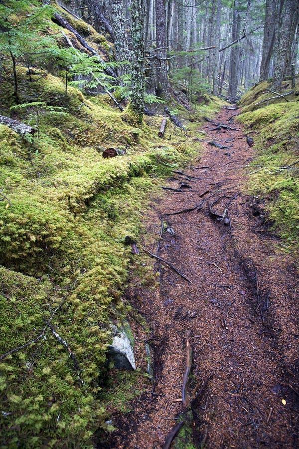 Traccia di escursione - foresta nazionale di Tongass, Alaska fotografia stock