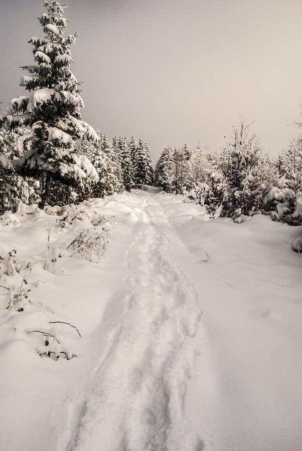 Traccia di escursione innevata di inverno con gli alberi intorno fotografia stock