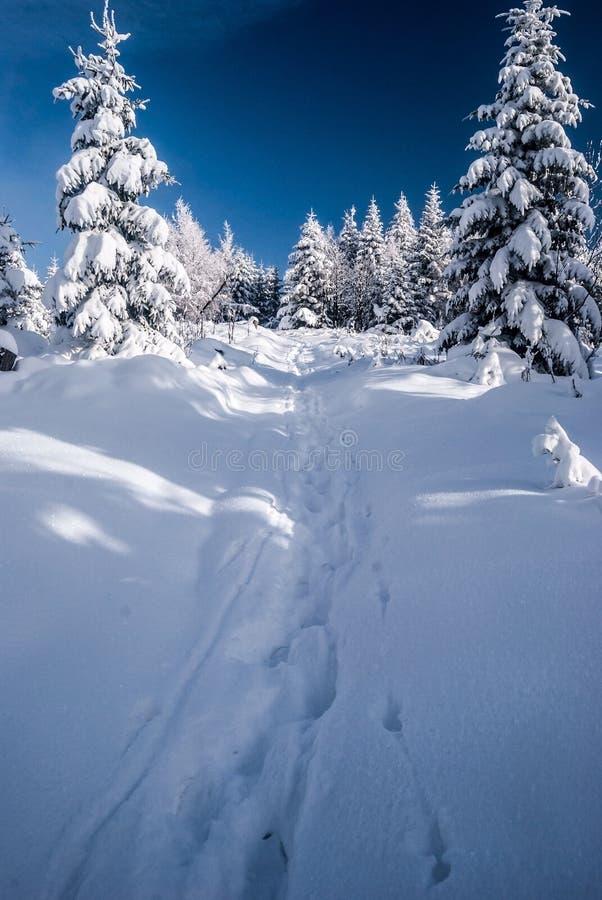 Traccia di escursione di inverno con gli alberi intorno, la neve ed il cielo blu in montagne di Beskids immagini stock libere da diritti