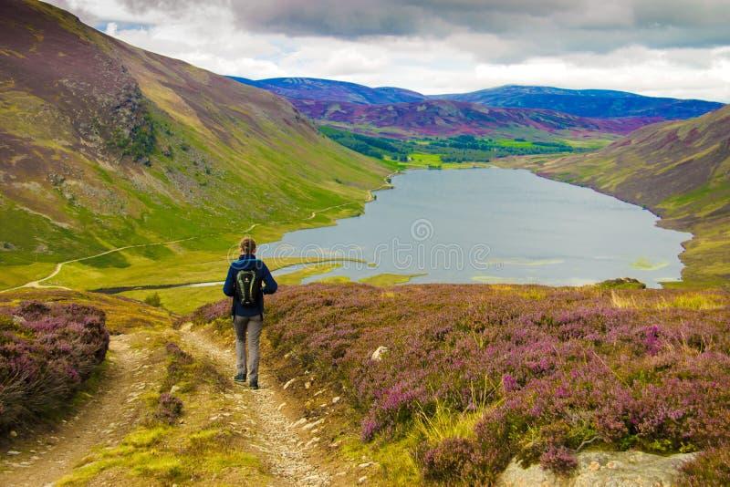 Traccia di escursione in montagne di Cairngorm, Scozia, Regno Unito immagini stock libere da diritti