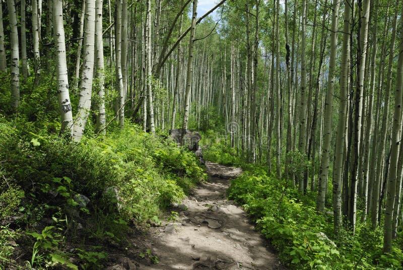 Traccia di escursione in montagne rocciose del Colorado fotografie stock libere da diritti
